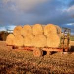 hay bails on farm